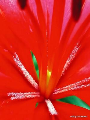 beauty, flowers, poetry