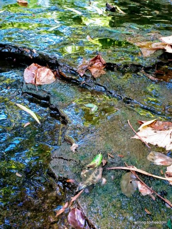 creek, beauty, poetry