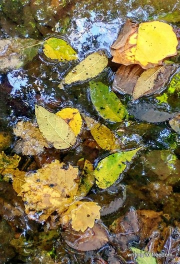 autumn, renewal, poetry