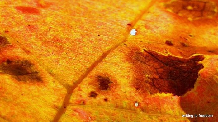 autumn colors, love, poetry