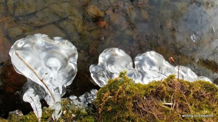 beauty, ice frost