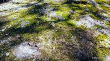moss, Ozarks, poetry