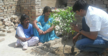 planting saplings, Awesome Stories
