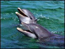 dolphins, Awesome Stories