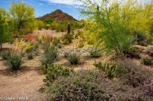 Desert Oasis, poetry