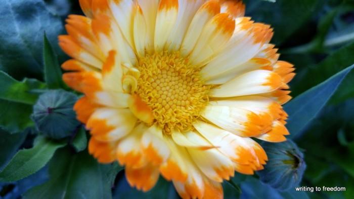 love, poetry, flowers