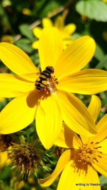 bees, beauty, poetry