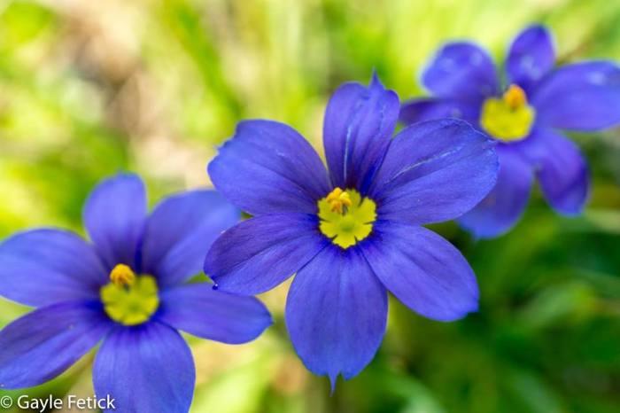 flowers, poetry