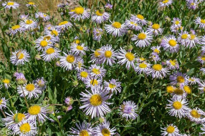 asters, smiles, poetry