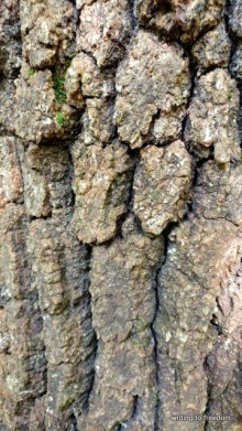 bark, beauty, poetry