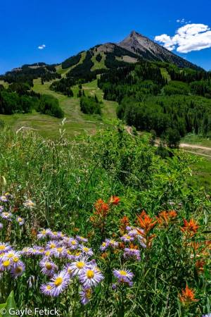Columbines, poetry, Colorado