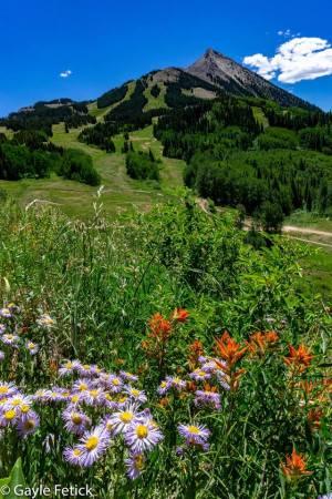 Columbines, poetry, Colorado