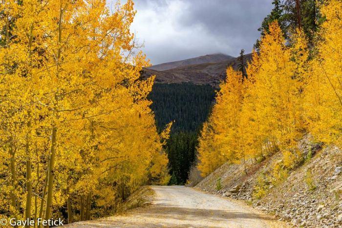 autumn, beauty, poetry