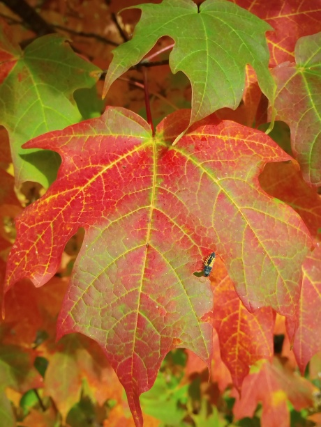 fall colors, beauty, poetry