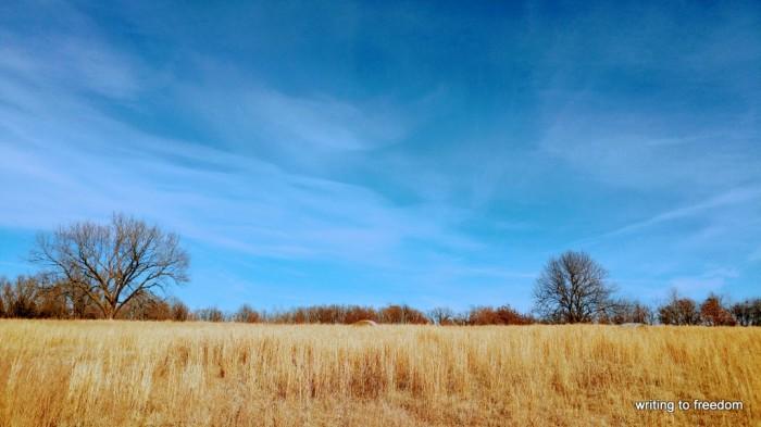 fields, dreams, possibility