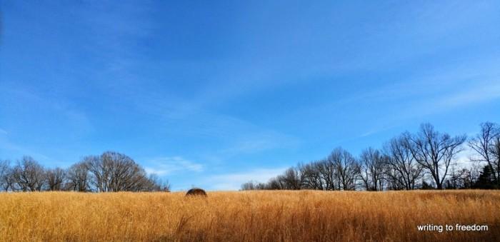 field, dreams, poetry