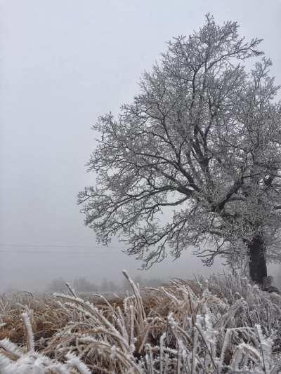 rime ice, fog, poetry