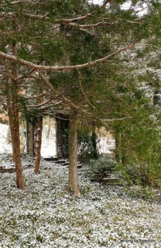beauty, snow