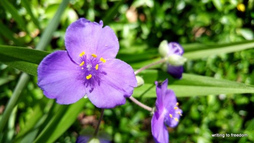spring, sing, poetry