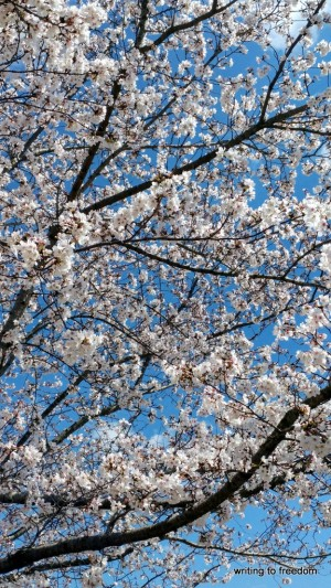 poetry, spring