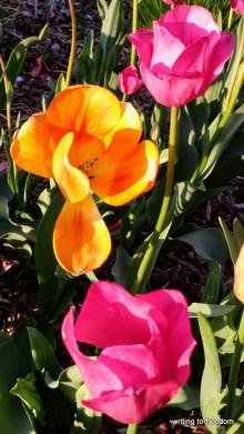 spring, love,poetry
