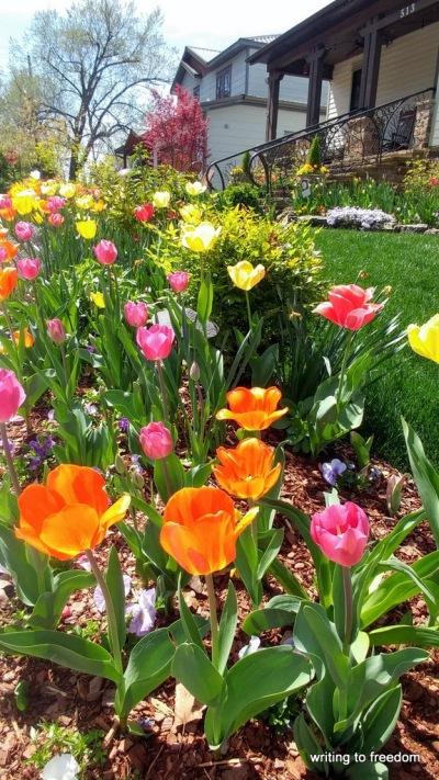 parade of blossoms