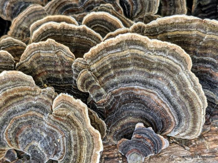 fungi, poetry