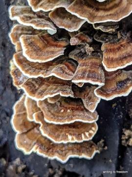 fungi, beauty