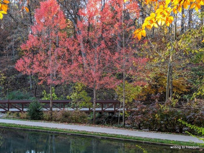 autumn, reflections