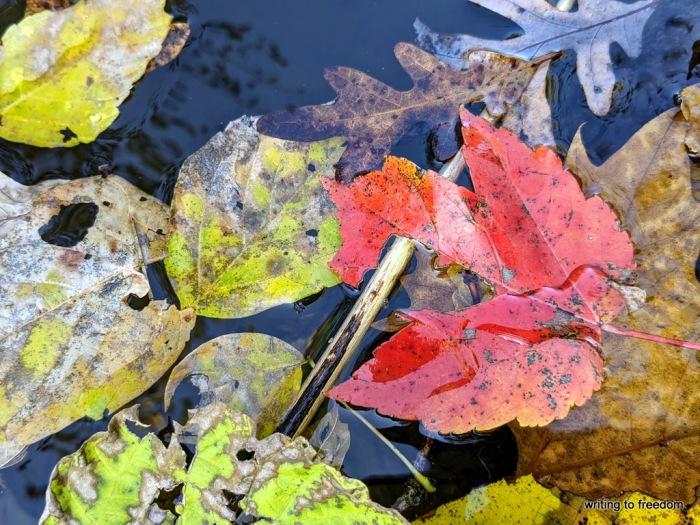 reflections, autumn