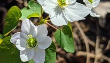 plant, beauty